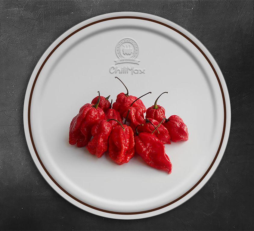 7 Pot Barrackpore Red