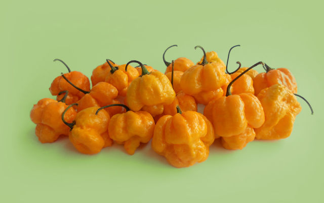 Tinidad-moruga-scorpion-yellow-900x562
